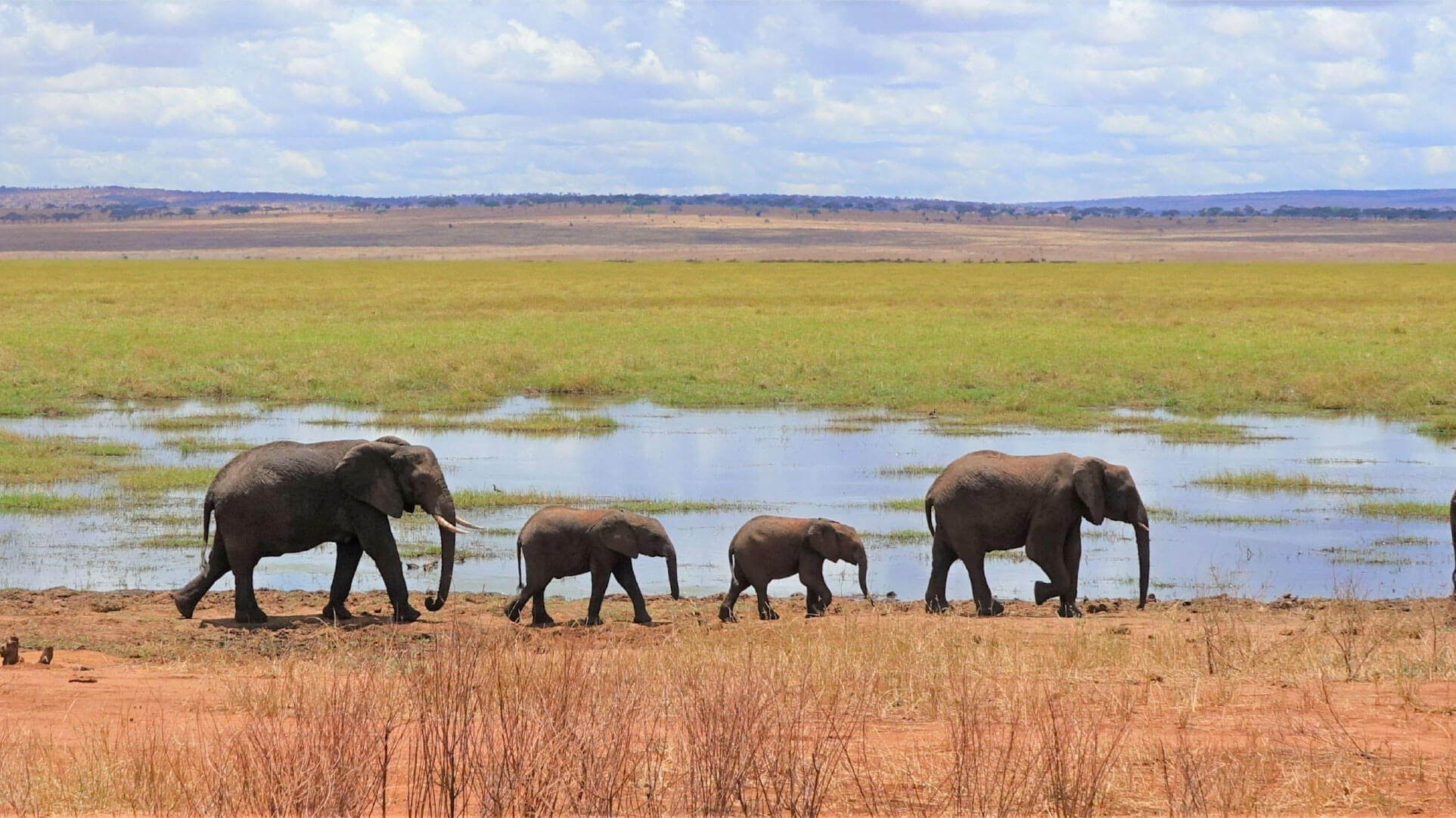 Elephant safari lake