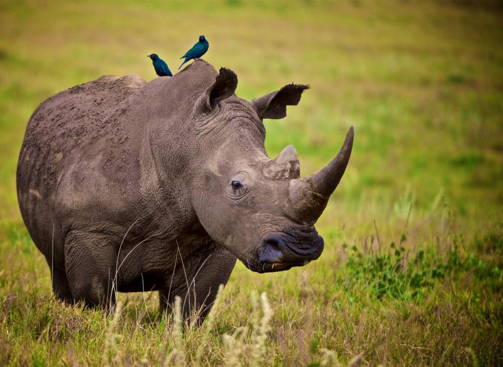 rhino lewa Kenya family safari