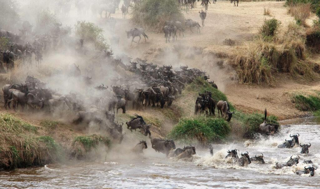 Tanzania great migration wildebeest crossing serengeti family safari