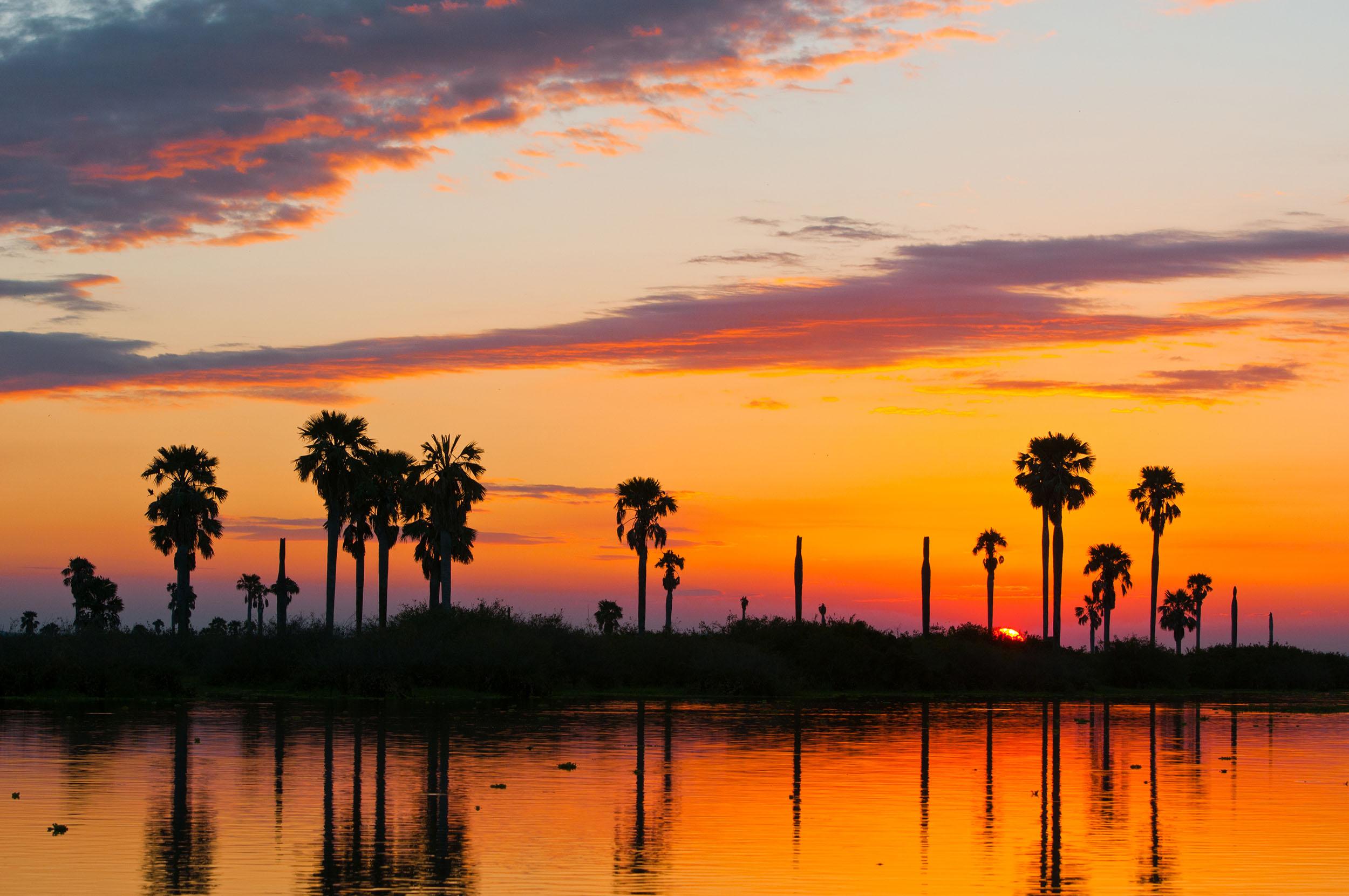Tanzania nyerere national park sunset palm trees rufiji river