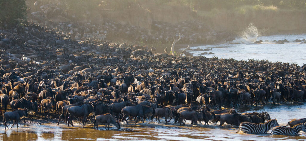Tanzania great migration numbers river serengeti family safari African safari holidays