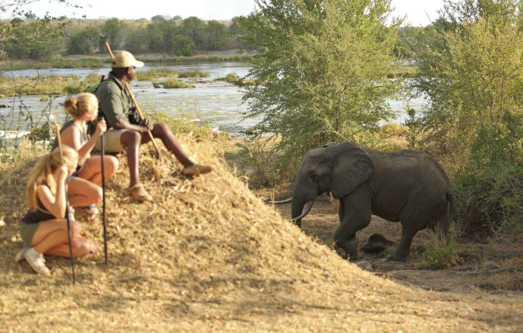 Azura Selous teenage family safari adventure Tanzania elephant